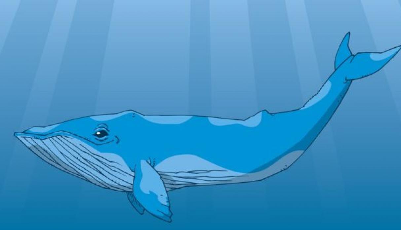 Las Ballenas (Whale): el gran peligro de la bolsa y las criptomonedas