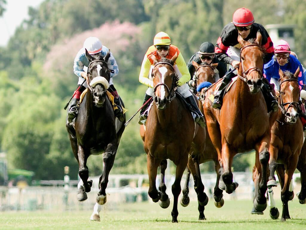 apostar carreras de caballos online